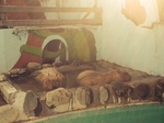 kapibara1.jpg