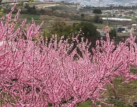 momonohana1.jpg